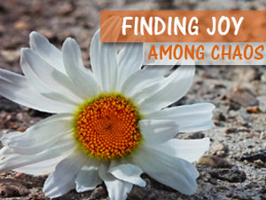 Joy Among Chaos: New Resource Page Created