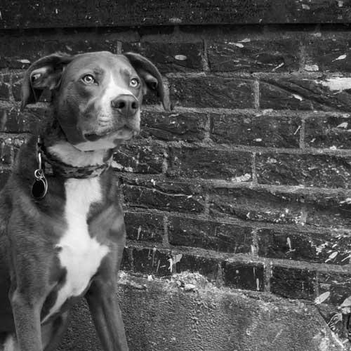 LeRoy_Dog